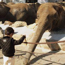 白浜アドベンチャーワールドで象に餌やり
