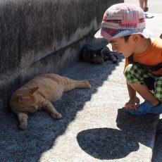 香川県の離島「男木島」の猫